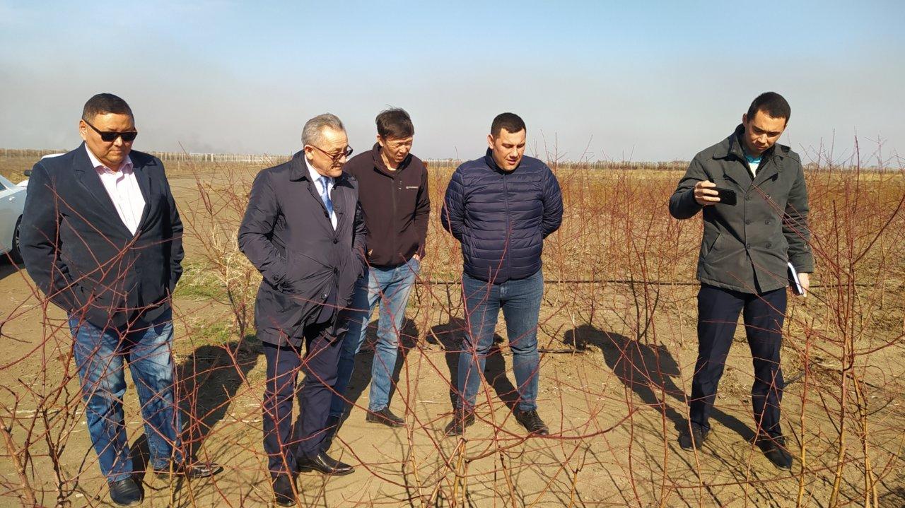 Казахстан планирует разбить несколько садов по примеру Астраханской области