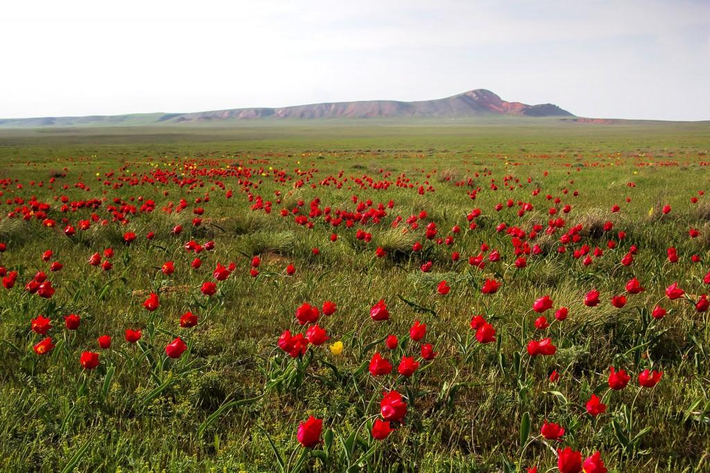Блогеры посоветовали россиянам ехать в Астраханскую область