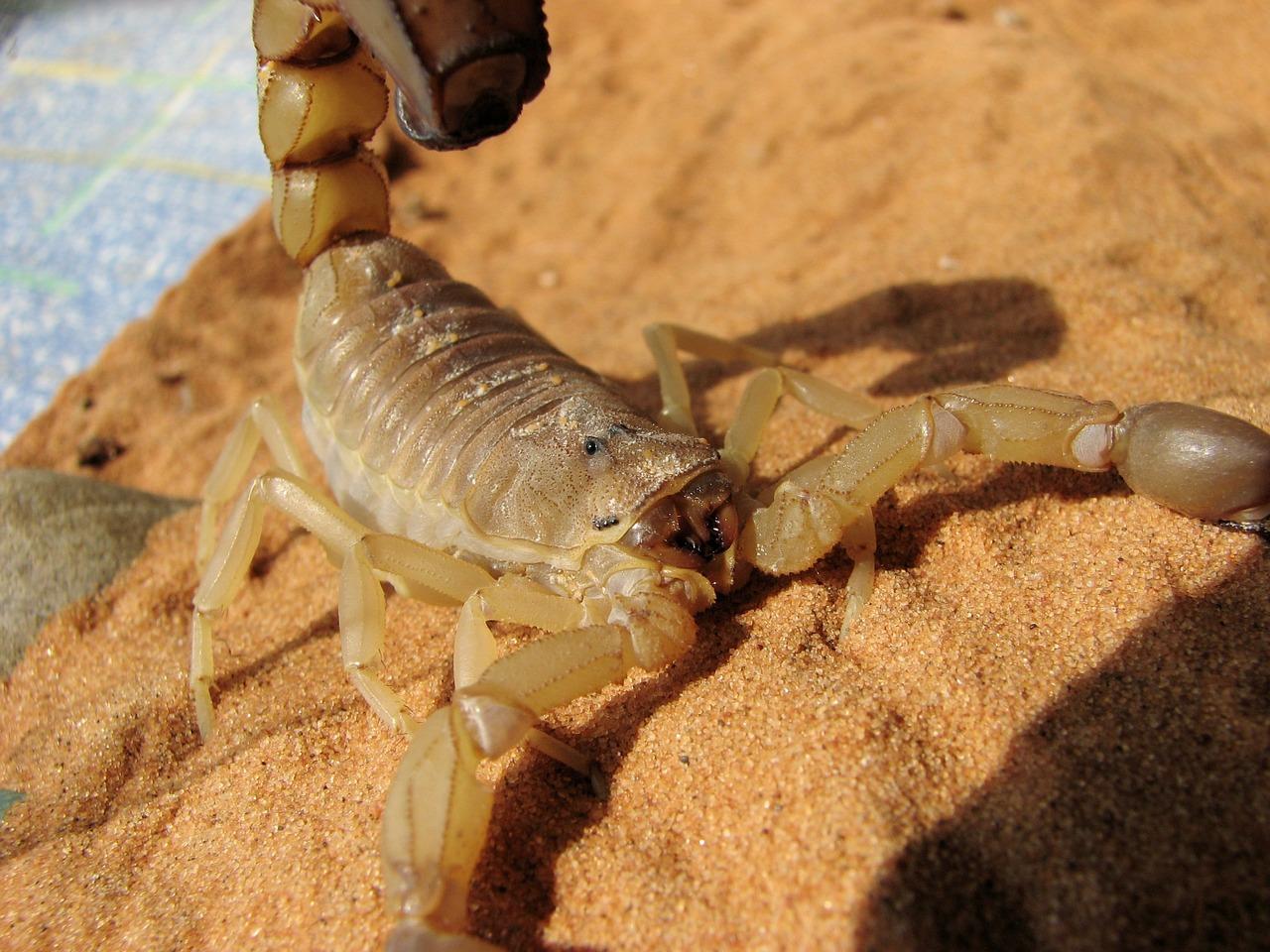 Под Астраханью стали появляться первые скорпионы