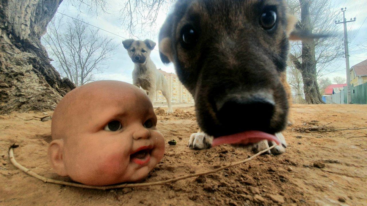 Астраханка написала открытое письмо губернатору из-за собак