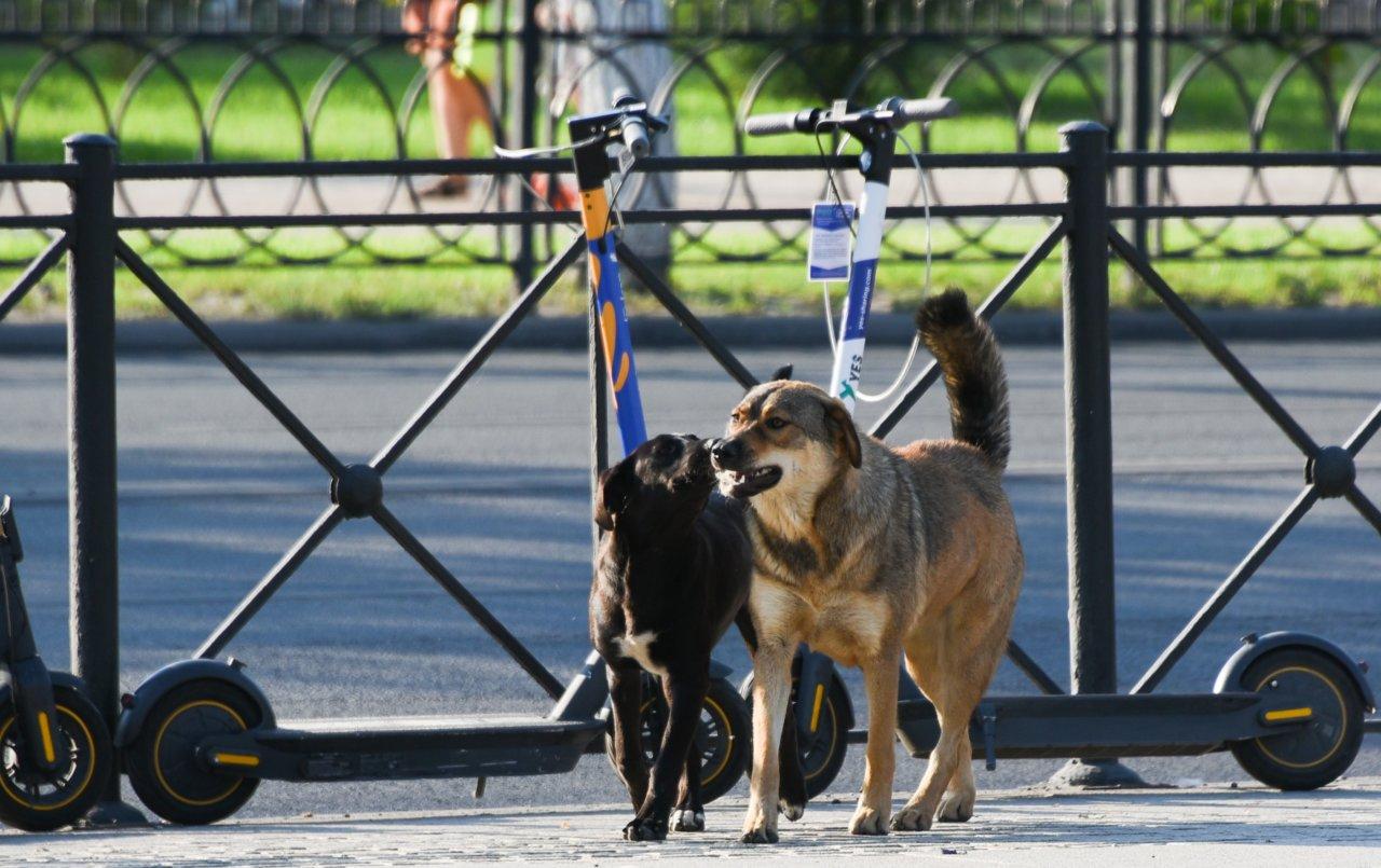 Собаки могут помешать астраханцам прийти на выборы