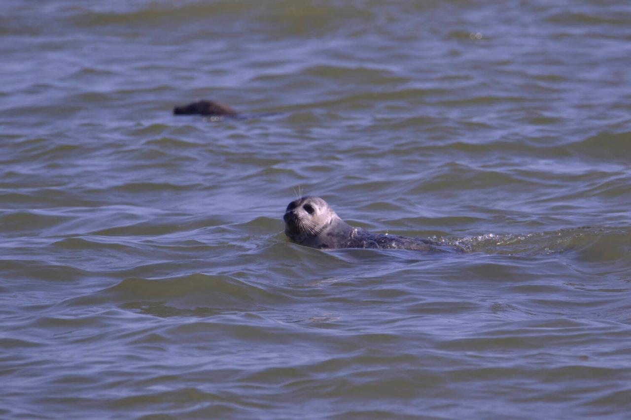 Побережье Каспийского моря оказалось усыпано мертвыми тюленями