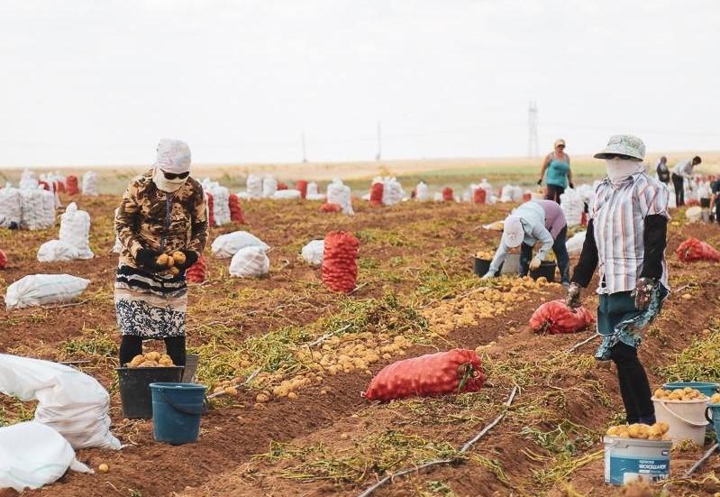 Почти две сотни работников из Узбекистана отправились трудиться в Астраханскую область