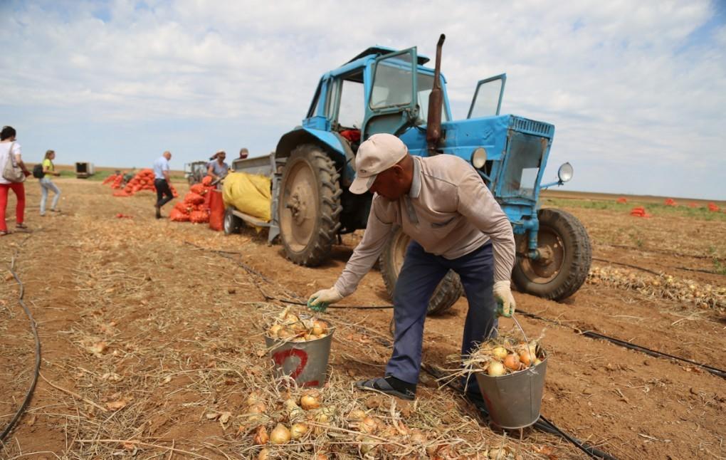 В Астраханской области рухнули объемы сбора урожая