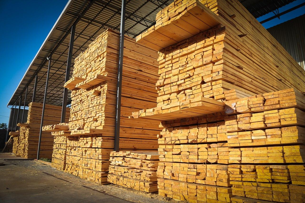 В Астраханской области стремительно дорожает древесина