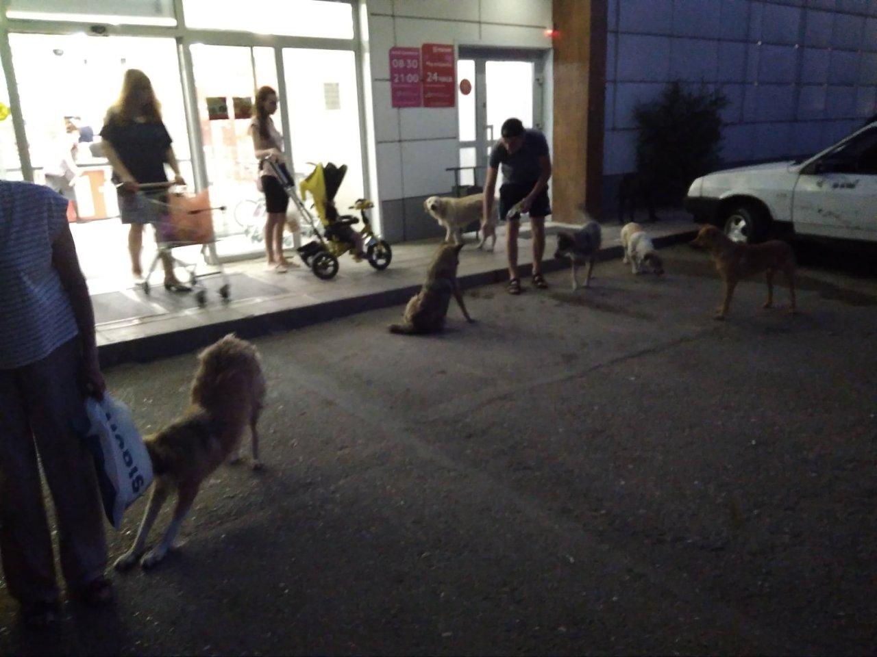 Бродячие собаки атакуют астраханцев на выходе из магазинов