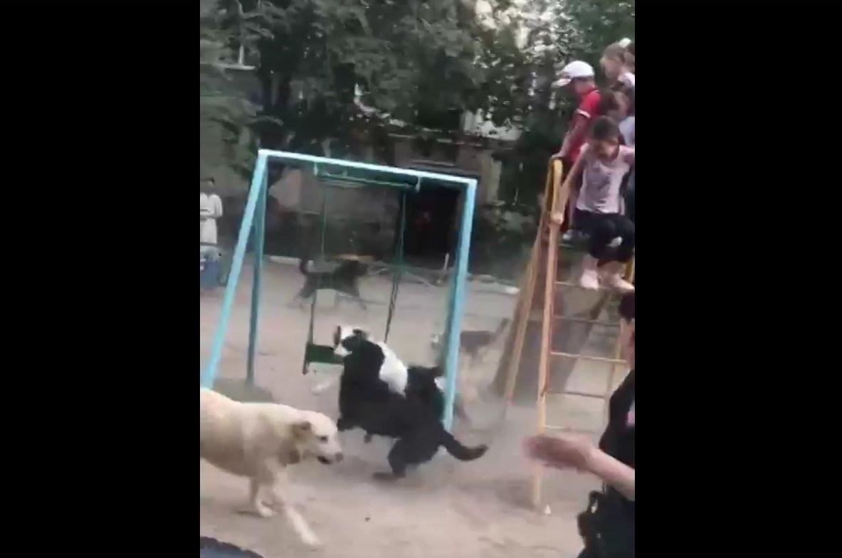 Собачьи стаи оккупировали дворы на улице Маркина