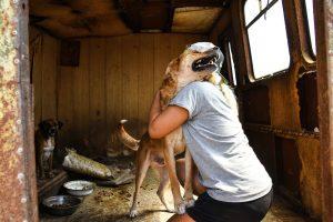 Астраханский частный приют для бездомных животных обезглавлен и переполнен