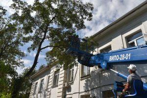 Астраханские коммунальщики опиливают аварийные деревья у школ