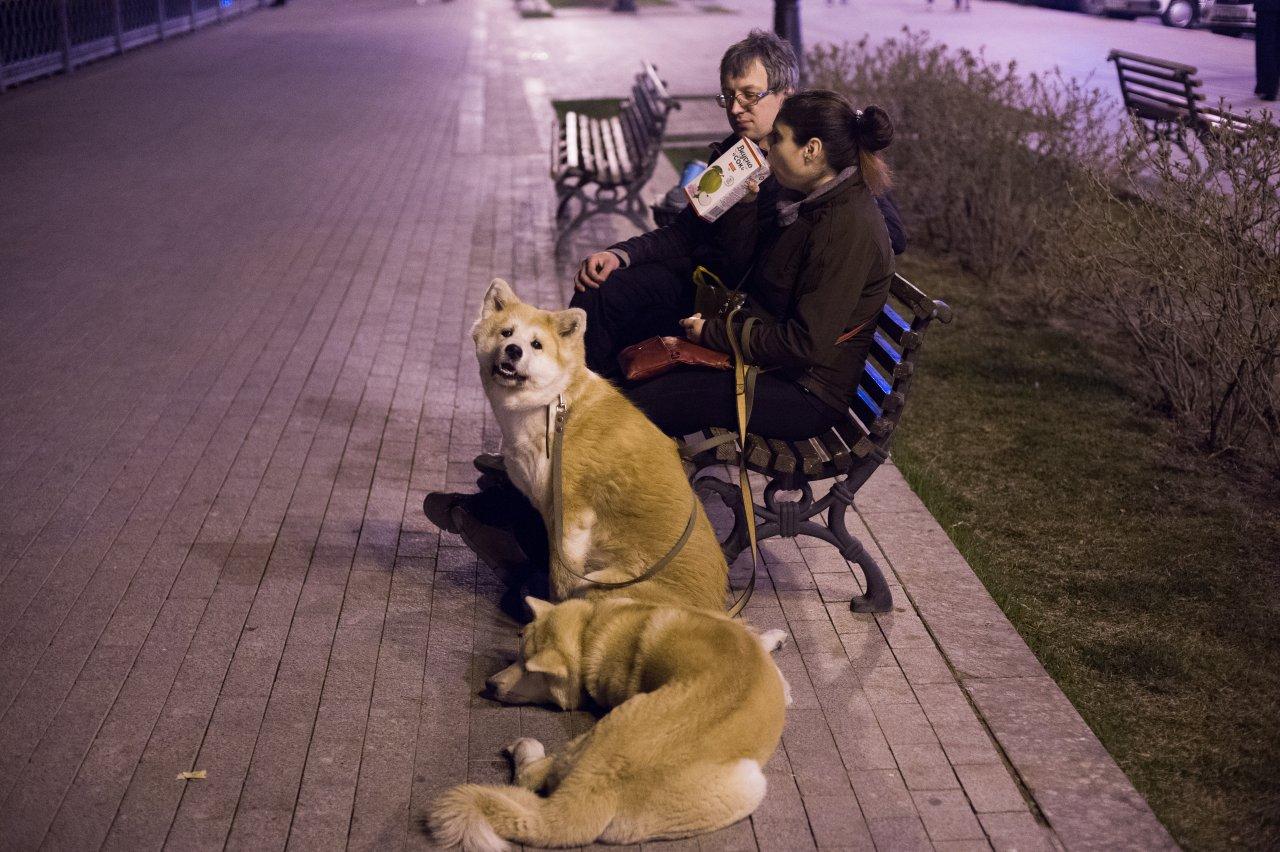 Астраханская область может установить собственные требования к выгулу собак