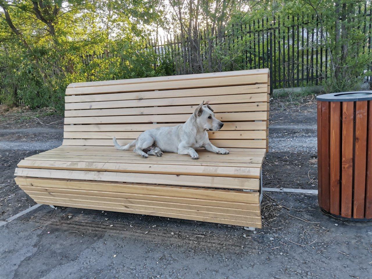 Недобросовестный подрядчик не ловил астраханских собак