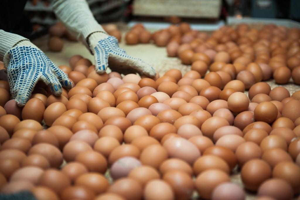 В Астраханской области рухнули объемы производства куриных яиц
