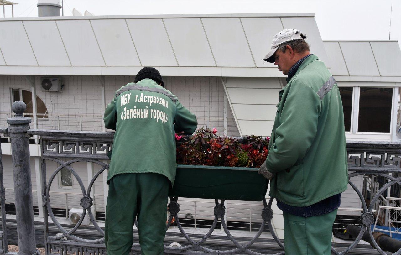 Астраханские озеленители готовят город к заморозкам