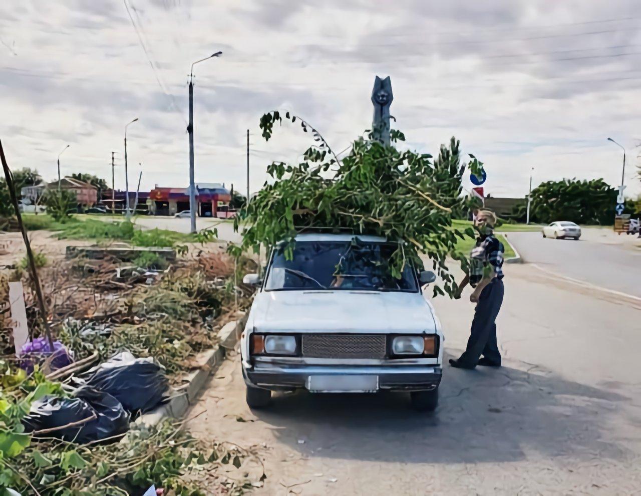 Астраханцы снова жалуются на пожароопасность сухих веток