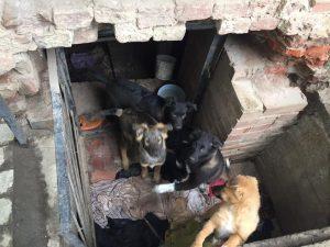 Астраханца возмутил собачий «приют» в центре города