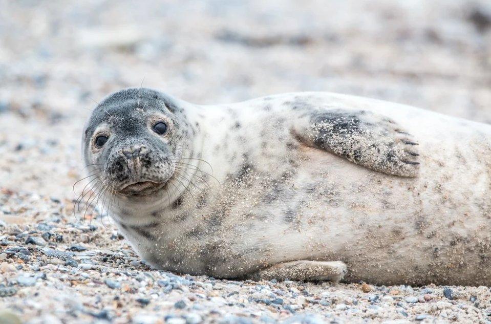 В Астрахани пройдут экспедиции по спасению тюленя