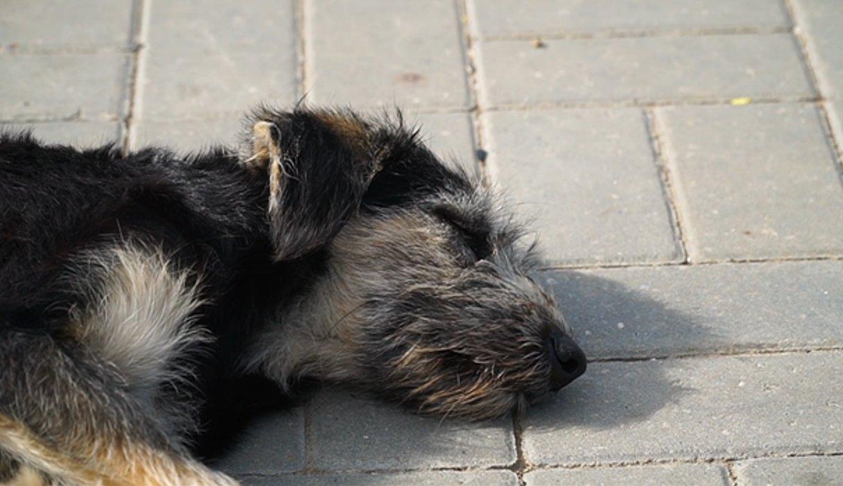 Что на самом деле произошло с собаками у «Магнита» в городе Нариманов?