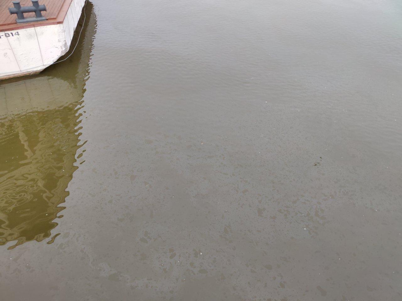 Волга вдоль центральной набережной в Астрахани покрыта нефтяной пленкой