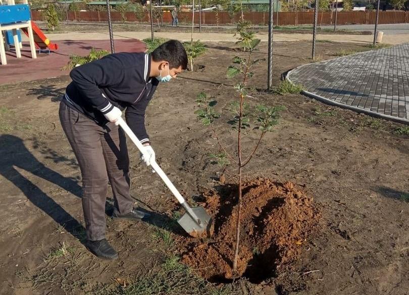 В лесах Астрахани высадят новые деревья