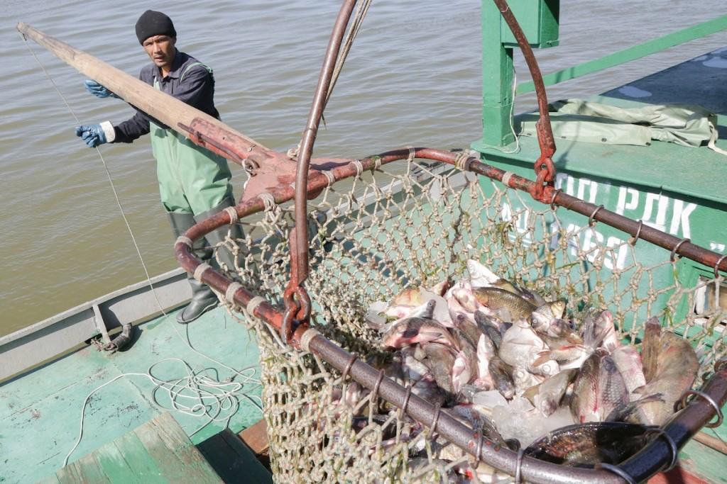 Астраханские предприятия ищут рыбаков и матросов