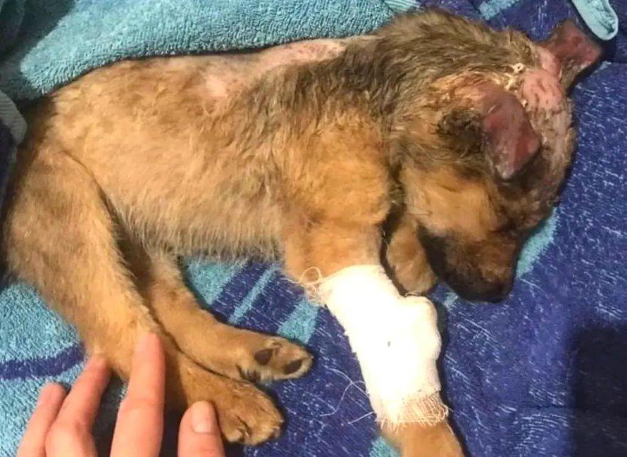 В Астрахани вынесли приговор женщине, облившей щенка шуманитом