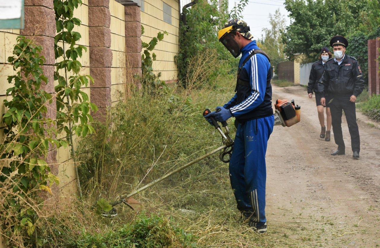 В Астрахани ведут борьбу с наркосодержащими растениями