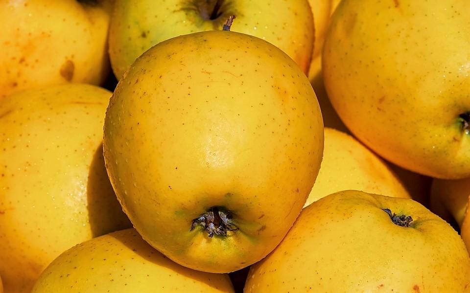 Астраханцам на яблоках объяснили, как действует вакцина