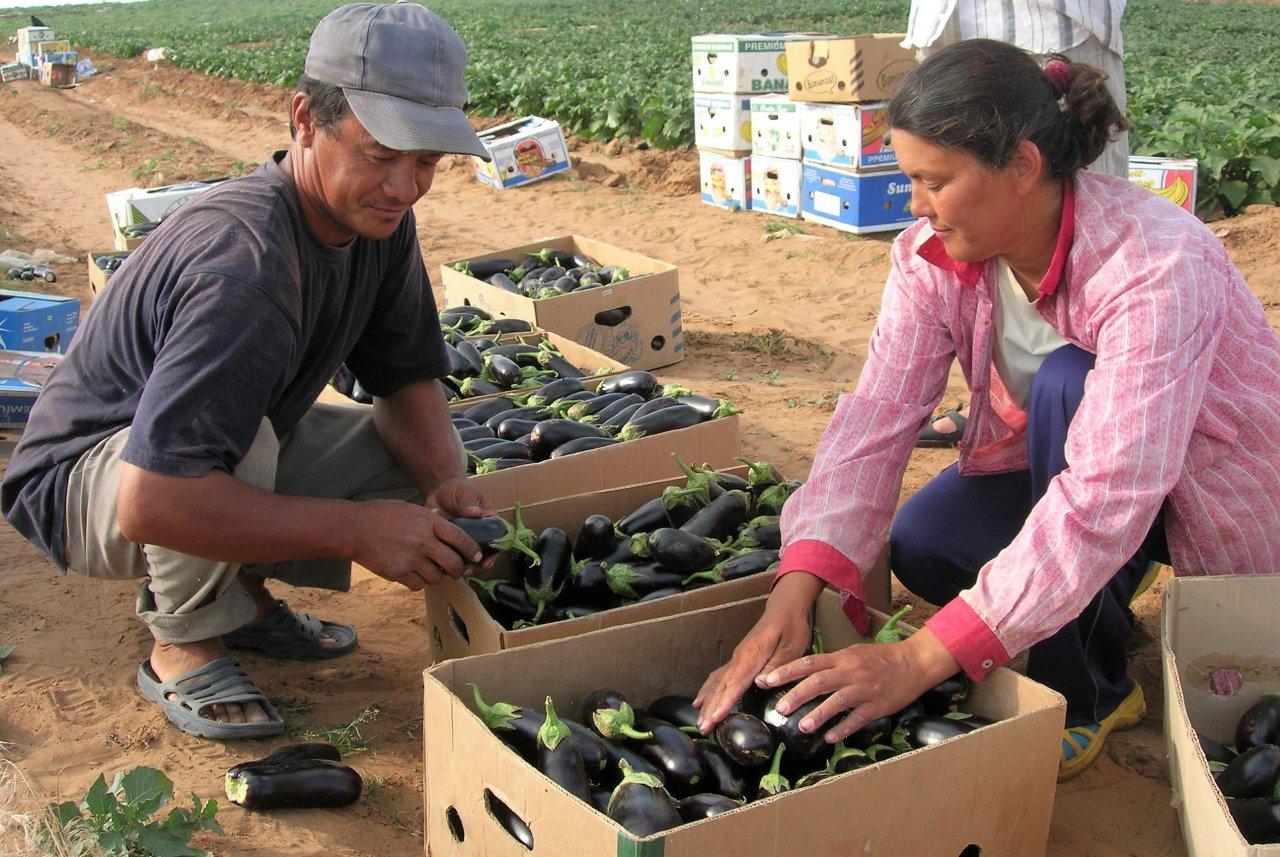 Астраханские фермеры смогут привлекать трудовых мигрантов без ограничений